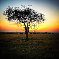 Sunset in the Masai Mara, Kenya, Africa.