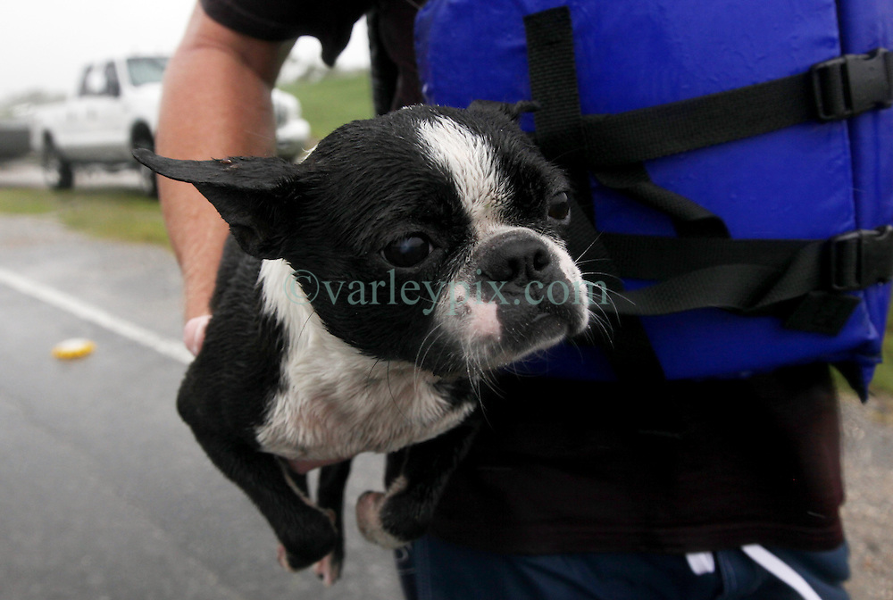 29 August 2012. Braithwaite, Plaquemines Parish, Louisiana,  USA. <br /> Emergency evacuations. A dog is rescued from flood waters. Hurricane Isaac batters the community of Braithwaite in Plaquemines Parish where residents were evacuated following the overtopping of a  levee. The water gushed in, inundating peoples houses on the 7th year anniversary of Hurricane Katrina.<br /> Photo; Charlie Varley/varleypix.com