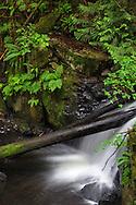 A small waterfall along Steelhead Creek at the Hayward Lake Recreation Area in Mission, British Columbia, Canada