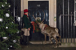 © licensed to London News Pictures. London, UK 17/12/2012. A reindeer brought to the Downing Street Christmas Party, standing outside the Number 10. Photo credit: Tolga Akmen/LNP
