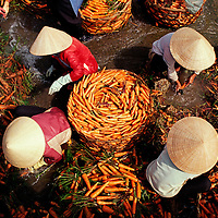 Washing carrots in Dalat, Vietnam