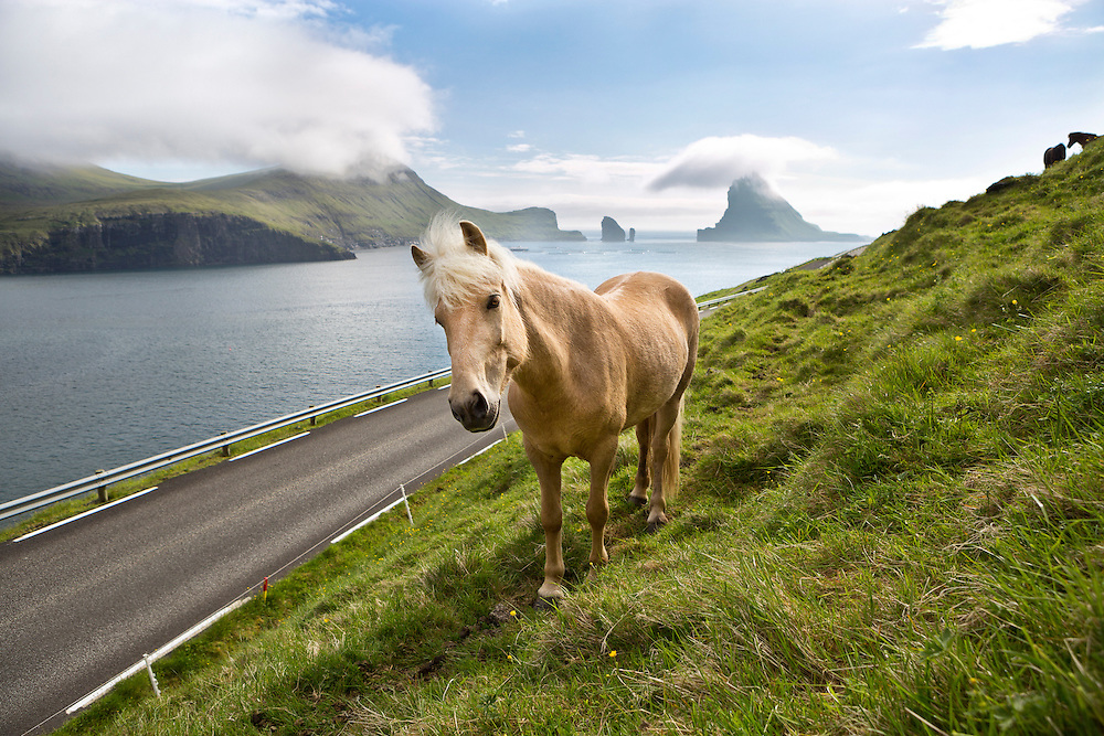 Vagar Island, Faroe Islands.<br /> <br /> A horse stands on the hillside along the road to Gasadalur, depicting a typical Faroese island scene.  Drangarnir and Tindholmur islands are present in the background.