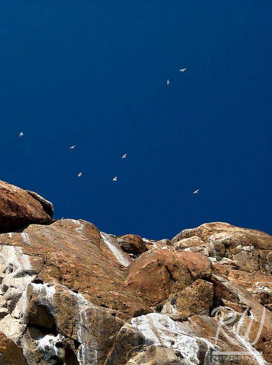 Seagulls Flying Above Morro Rock, Morro Bay, California