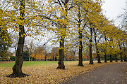 City of London Cemetery and Crematorium in Aldersbrook Road, Manor Park, London E12 5DQ. Photograph taken on Thursday 17 November 2016 in the morning