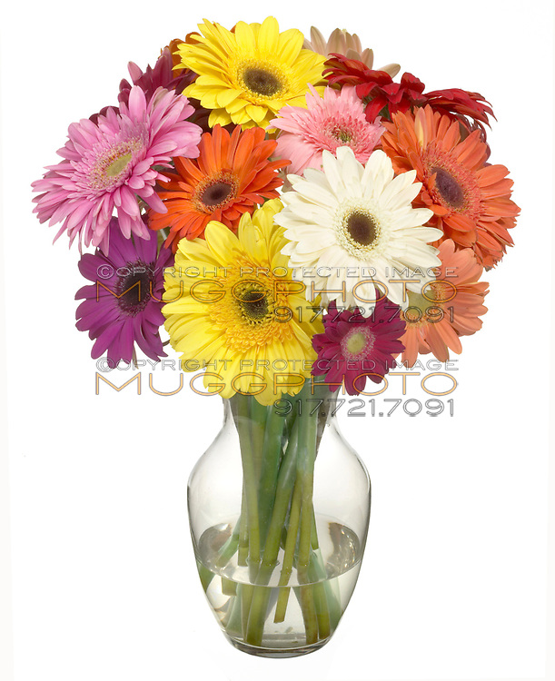 multi colored gerber daisies in a bouquet