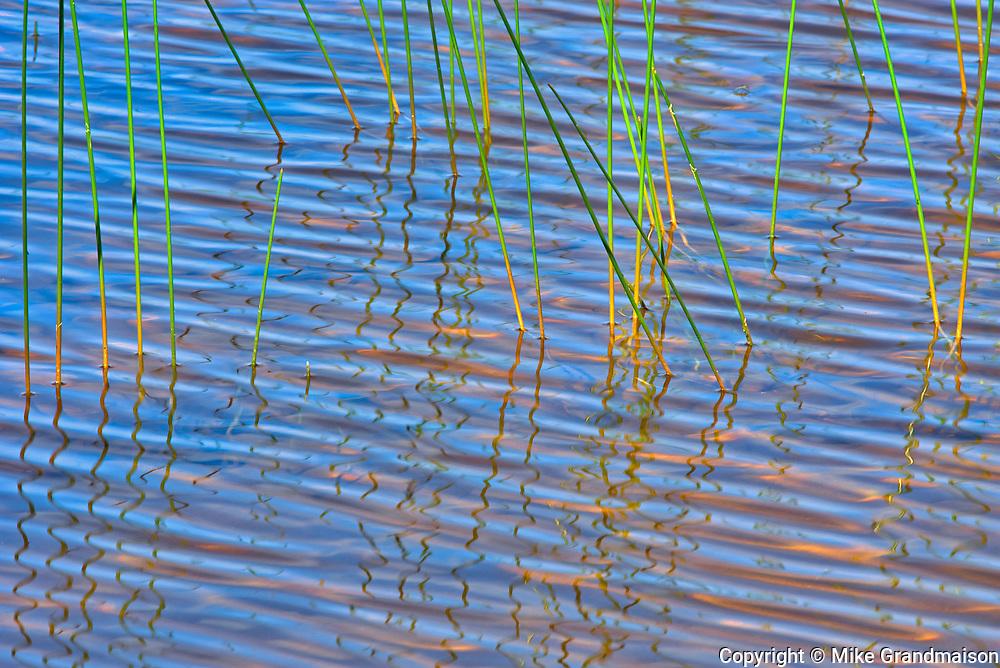Reeds on Lac des Sables at sunrise<br />Belleterre<br />Quebec<br />Canada