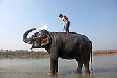 Elephant Joy Ride - Nepal