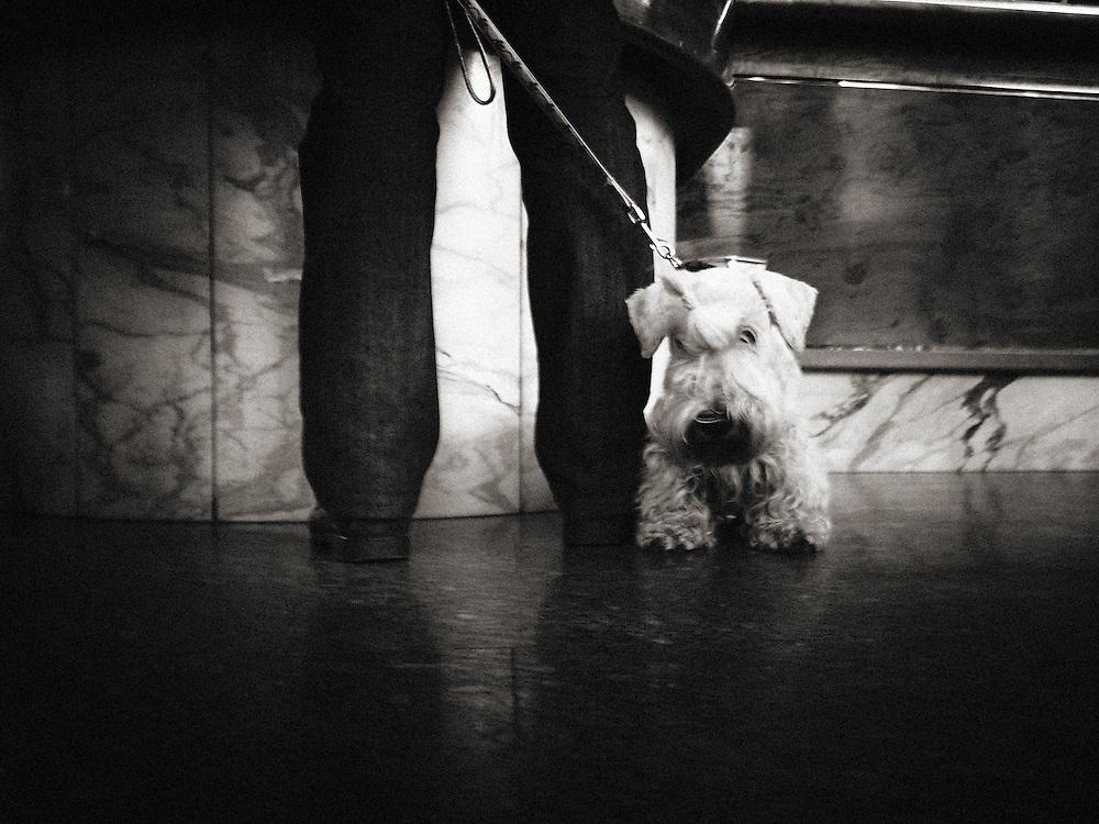 Dog, Italy, Lombardy, Milan, Milano, Street photography