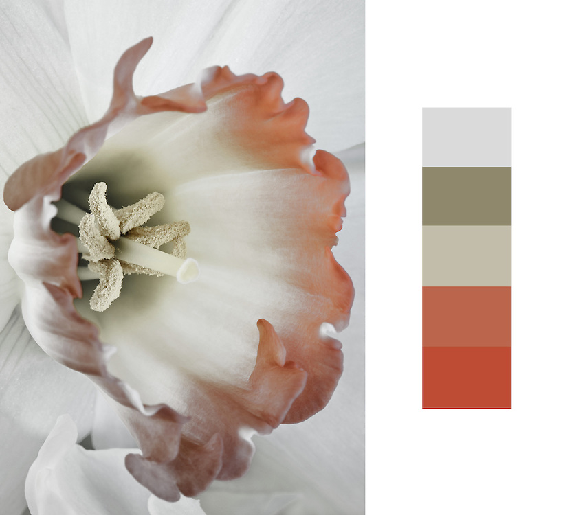Example of a color swatch with photograph can be sent to you for your projects.