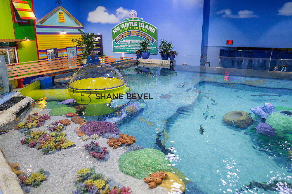 3/2/17 10:55:33 AM -- The ribbon cutting and grand opening of the new sea turtle exhibit at the Oklahoma Aquarium in Jenk, Okla. <br /> <br /> Photo by Shane Bevel