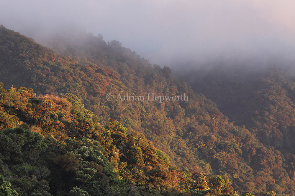Late afternoon sunlight illuminates Monteverde Cloud Forest Preserve, Costa Rica. <br />