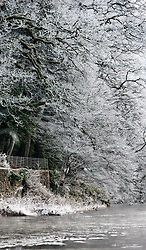 Frost on trees on the side of the River Tay at the start of the 2012 fishing season..Pic © Michael Schofield...