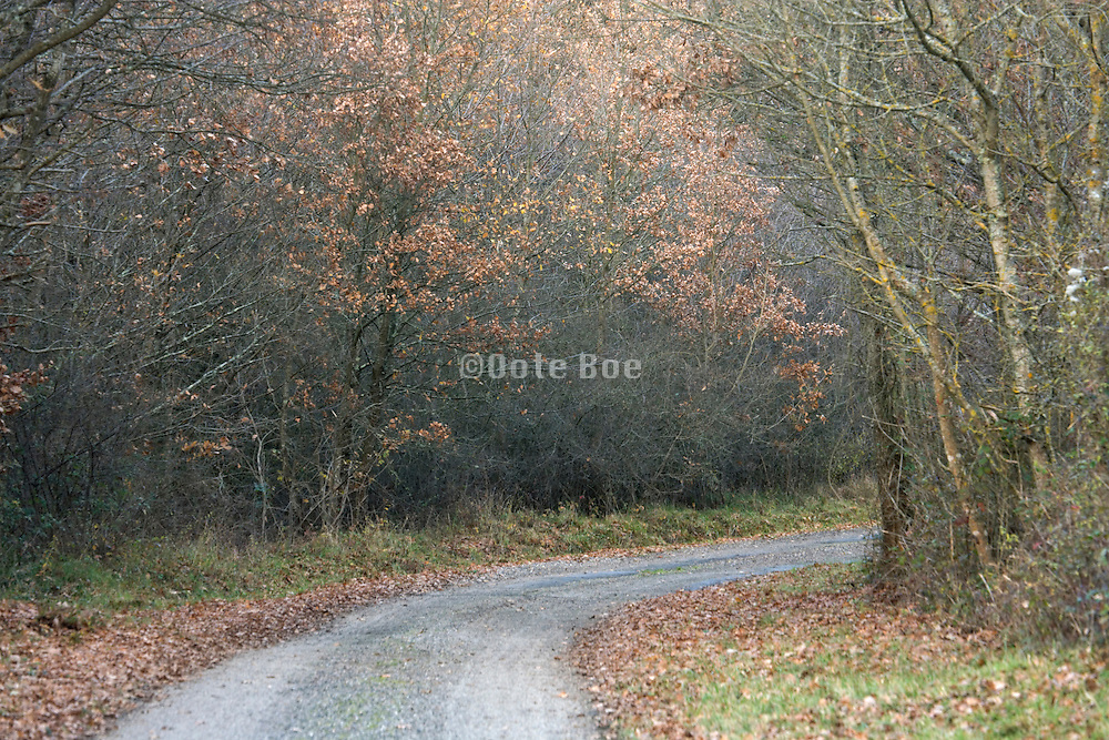 curving rural little road in wooded environment