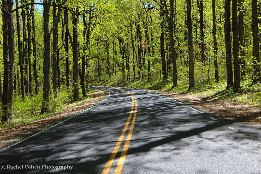 &quot;Through Shadow Woods&quot;<br /> <br /> The beauty of sunlight and shadow through the forests of Shenandoah National Park on Skyline Drive!!<br /> <br /> The Blue Ridge Mountains by Rachel Cohen