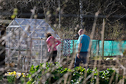 Livingston gardeners tend their allotments, 07 April 2020<br /> <br /> Some gardeners are keeping their allotments in shape during the coronavirus lockdown. West Lothian Council have said they can use it as part of their daily exercise as long as they keep to social distancing rules.<br /> <br /> The West Lothian Council website has the following advice:<br /> <br /> Allotments<br /> <br /> If you visit your allotment as your daily exercise, you must adhere to the rules on social distancing and hygiene. Handwashing is especially important before and after touching shared surfaces such as gates and taps. Shared indoor spaces on allotment sites should not be used, to minimise the risk of virus transmission.<br /> <br /> The Scottish Government has published the following statement on allotment sites during the COVID-19 outbreak:<br /> <br /> Decisions on whether or not to keep allotment sites open during the COVID-19 outbreak are currently a matter for local authorities and other allotment owners. Those wishing to access allotments should note that the Scottish Government has instructed people to stay at home. The Health Protection (Coronavirus) (Restrictions) (Scotland) Regulations 2020 prohibit any person from leaving the place they are living without a reasonable excuse, and ban public gatherings of more than two people. People over the age of 70 are advised to self-isolate.<br /> <br /> Pictured: The Livingston allotment is locked up but gardeners have keys. Two gardeners tend their plot.<br /> <br /> Alex Todd | Edinburgh Elite media