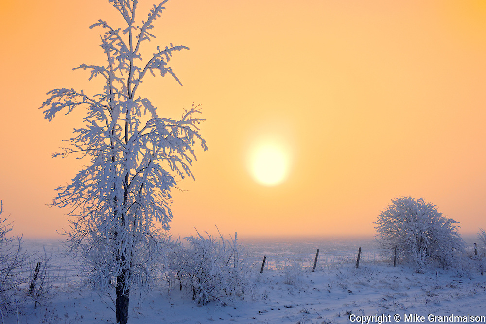 Fog,  hoarfrost and trees on the prairie<br /> DUgald<br /> Manitoba<br /> Canada