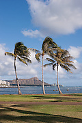 Three palm trees at Ala Moana Beach Park with Diamond Head in the background.