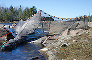 An elver net, or fyke, in Northeast Creek, Bar Harbor, Maine