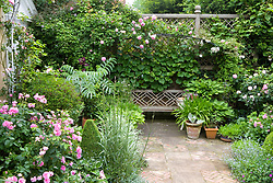 Bench seat on terrace with Rosa 'Ispahan' in the foreground and R. 'Constance Spry' over bench. Decorative paving
