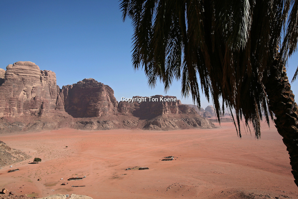 An oasis in the desert near Wadi Rum, Jordan