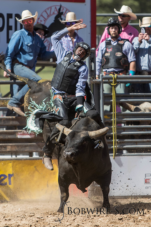 Bull rider Aukai Kaai rides Salt River Rodeo's 313 Nut Cracker in the first performance of the Elizabeth Stampede on Saturday, June 2, 2018.