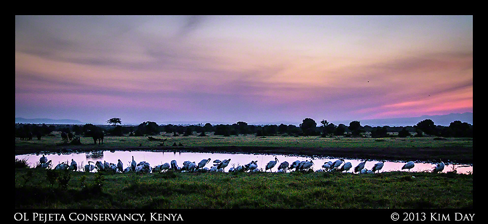 Birds at watering hole at sunrise<br /> OL Pejeta Conservancy - Kenya<br /> September 2013