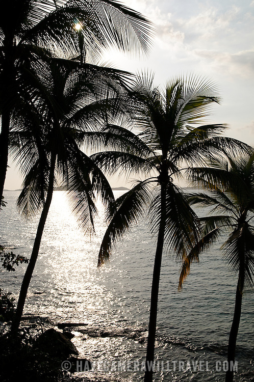 Palm trees in the Caribbean with backlighting from the sun and water