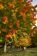 Autumn tree with red, orange and yellow leaves