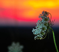 Sunset Flower ohio image for sale