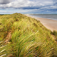 Dune Grasses at Druridge Bay near Amble by the Sea on the Northumberland Coast England