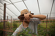 Mark Jacobs ties a string for tomatos at Green Edge Garden in Amesville. Photo by Ben Siegel/ Ohio University
