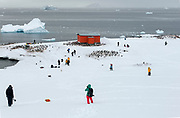 Ecotourists and Gentoo penguin colonies at Mikkelsen Harbor, Trinity Island on the Antarctic Peninsula. The refuge hut was raised by the Argentinian Antarctic Expedition 1954-1955
