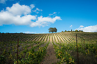 Joseph Family Vineyards, Healdsburg, California