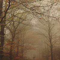 Two unrecognizable persons walking side by side on a path through an autumn forest on a foggy day