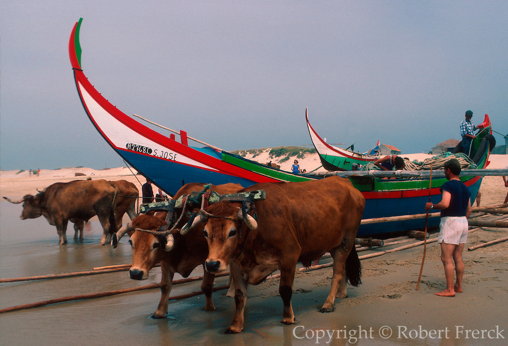 PORTUGAL, CENTRAL REGION launching traditional wooden fishing boats using oxen at Mira south of Aveiro on the Atlantic coast
