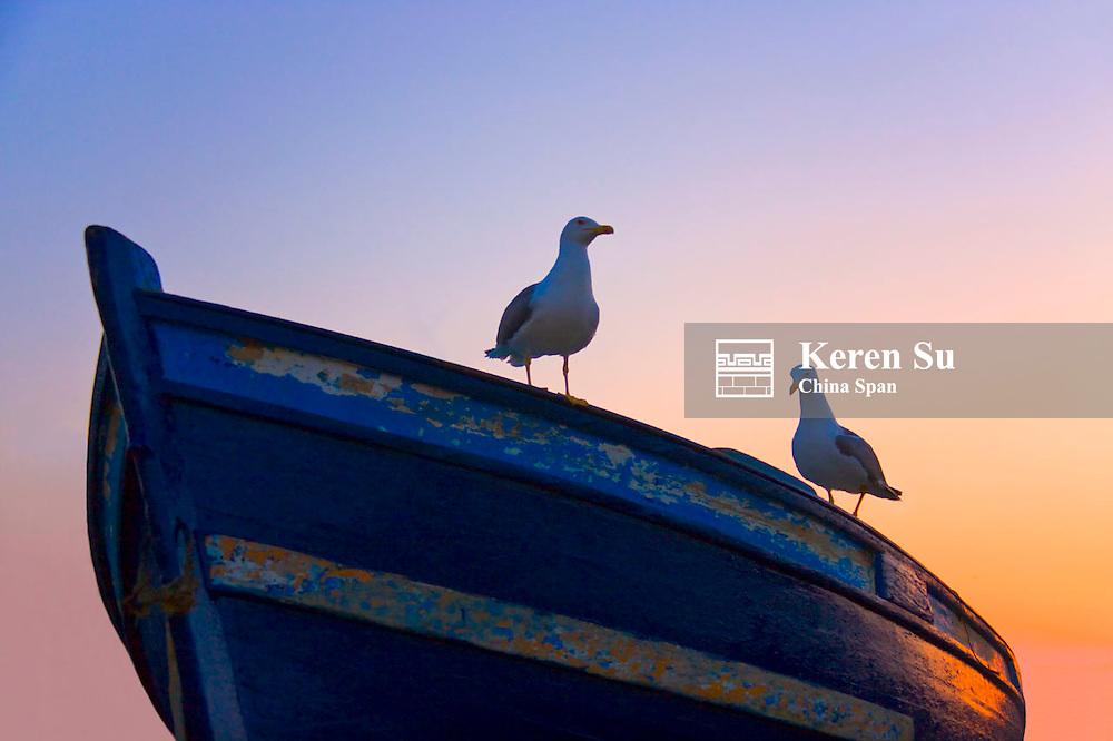 Seagulls on canoe in Skala Du Port at sunset,Essaouira, Morocco