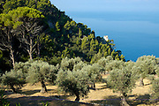 Spanien Spain,Mallorca Balearen..Valldemossa..Beim ehem. Kloster Miramar bei Deia, bewaldete Kueste, Turm..coast near Deia, forest....