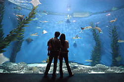 Visitors looking at sealife in modern large glass walled aquarium in Pudong Shanghai