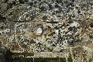 Miami Tequesta Archaeology Site