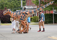 Goshen, New York - A team from Mad Science of the Mid Hudson takes Fluffy, a six-month-old Tyrannosaurus rex for a walk through downtown Goshen on June 11, 2016.