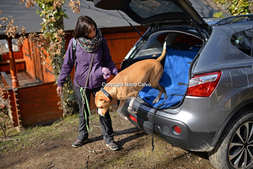 Dog jumps out of car trunk