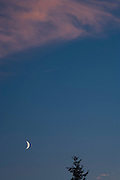 A crescent moon punctuates a blue sky shared by an alpenglow lit cloud and a lone Douglas Fir tree.