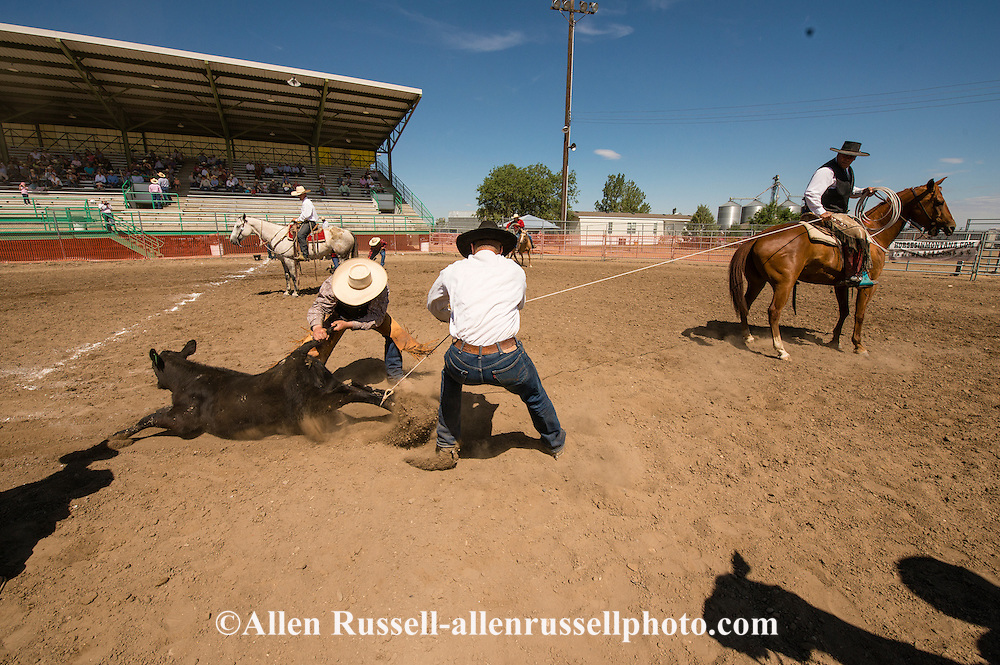 Will James Roundup, Ranch Rodeo, Calf Branding, Hardin, Montana
