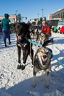 Skorpan och Holly är redo för den ceremoniella starten av 2017 Iditarod, Anchorage, Alaska, USA