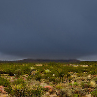 A rare rain squall brushes over Cima Mesa and the high country desert of Mojave National Preserve.