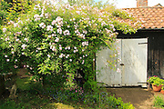 Property Released black tarred wooden barn shed in garden, Shottisham, Suffolk, England, UK
