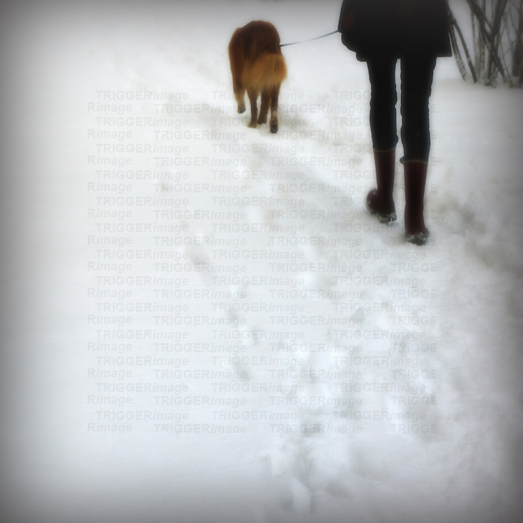 A young woman walking a dog in the snow