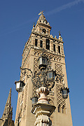 La Giralda,tower of the Sevilla Cathedral (Year 1198), Sevilla,Andalucia,Spain,Europe