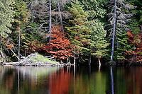 A beaver lodge and pond in autumn near Labelle, Quebec. © Allen McEachern.