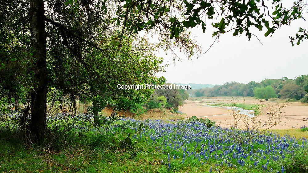 "Bluebonnets on a rise overlooking the Blanco River near Fredericksburg, Texas. NOTE: Click ""Shopping Cart"" icon for available sizes and prices. If a ""Purchase this image"" screen opens, click arrow on it. Doing so does not constitute making a purchase. To purchase, additional steps are required."